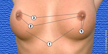 3 размер груди у соски